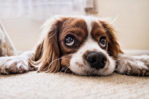 Modern Lifestyle Impacts Pets